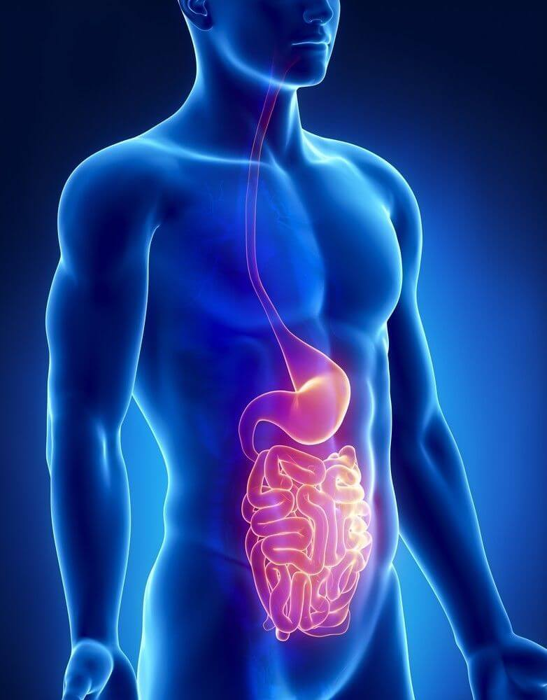 Digestion Of Protein How Your Body Uses Protein
