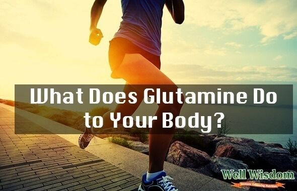 what does glutamine do to your body
