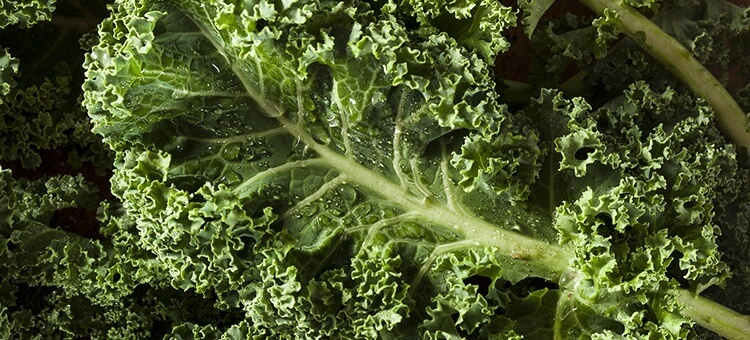 kale is on the list of 10 best superfoods