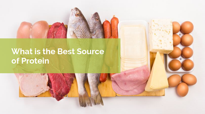 What is the Best Source of Protein
